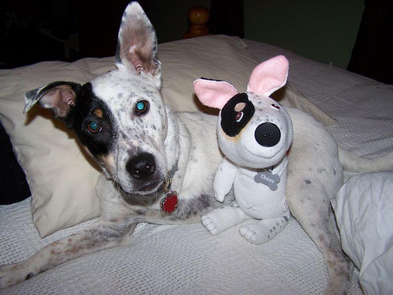 Sock dogs 002