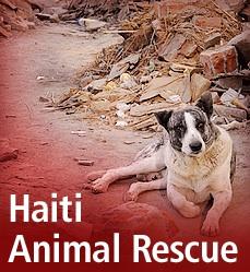 Haitidog