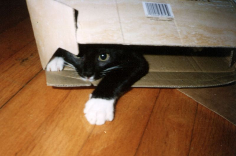 Nemo in box